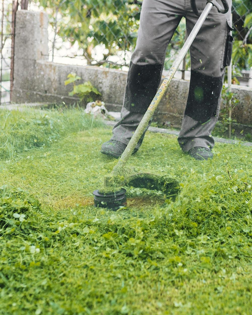 Servicio de jardinería en Madrid. ¿Necesitas un jardinero?